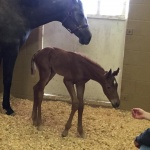 SECRET IRONS - Filly out of Classic Jill (Owner: Megan Smith)